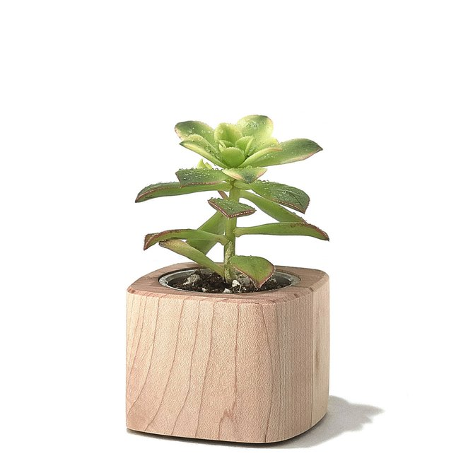 Grovemade maple planter